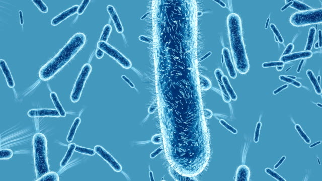 bacterium closeup alpha channel - infectious disease stock videos & royalty-free footage