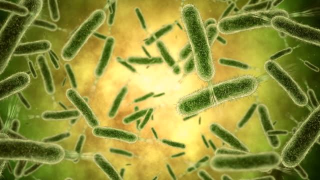 bakterium nahaufnahme - vignettierung stock-videos und b-roll-filmmaterial