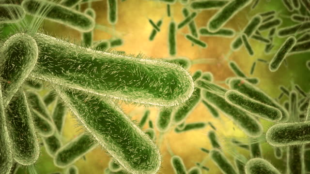 bacterium closeup - bacterium stock videos & royalty-free footage