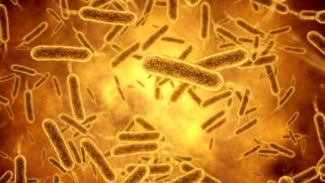 bacterium closeup - vignette stock videos & royalty-free footage