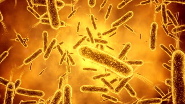 bacterium closeup - escherichia coli stock videos & royalty-free footage