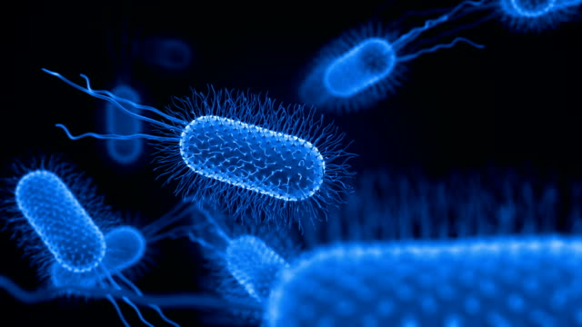 bacterium medical background - bacillus subtilis stock videos and b-roll footage