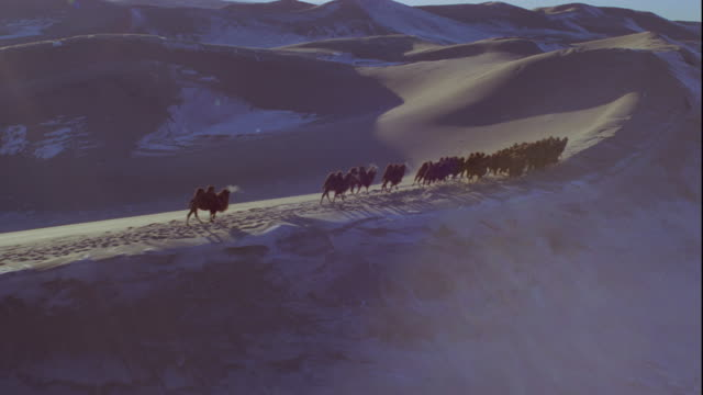bactrian camels cross frozen sand dunes. available in hd. - camel stock videos and b-roll footage