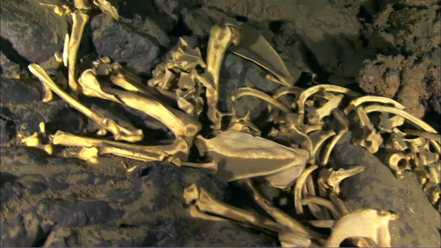 badger bones at the bottom of the lake inside yongcheon cave (unesco world natural heritage site), jeju island - bone stock videos & royalty-free footage