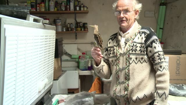 badger polecat and even fox just some of the roadkill animals that 74 year old arthur boyt has scooped up off britains roads and popped into a pot... - run over stock videos & royalty-free footage