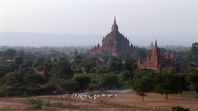 bagan ruins in myanmar - arbetsdjur bildbanksvideor och videomaterial från bakom kulisserna