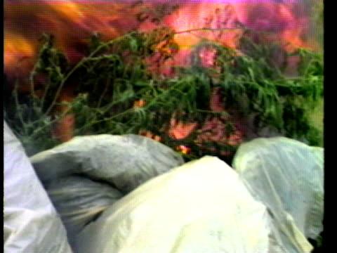 vídeos de stock e filmes b-roll de bags of confiscated marijuana plants burning in field following drugs bust/ hawaii islands usa/ audio - plano médio