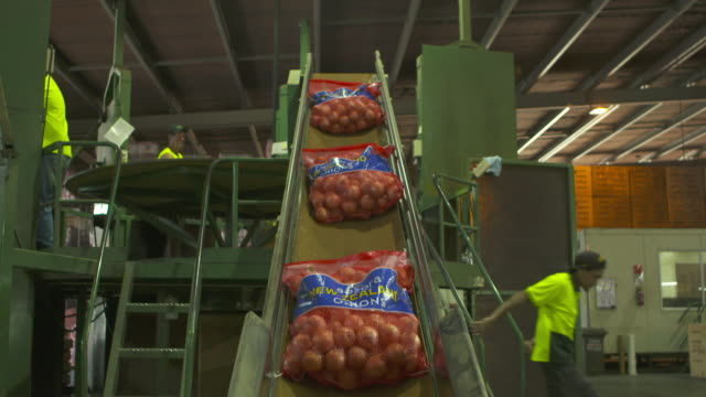 Bags of onions on conveyor belt at processing warehouse