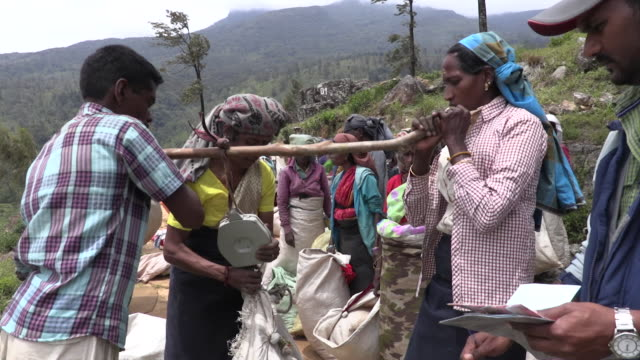 bags of picked tea leaves being weighed on loolecondera tea plantation in kandy sri lanka - plantation stock videos & royalty-free footage