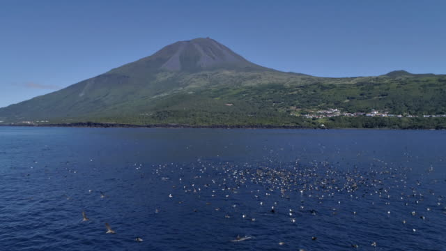 bait ball situation in front of pico island - pod group of animals stock videos & royalty-free footage