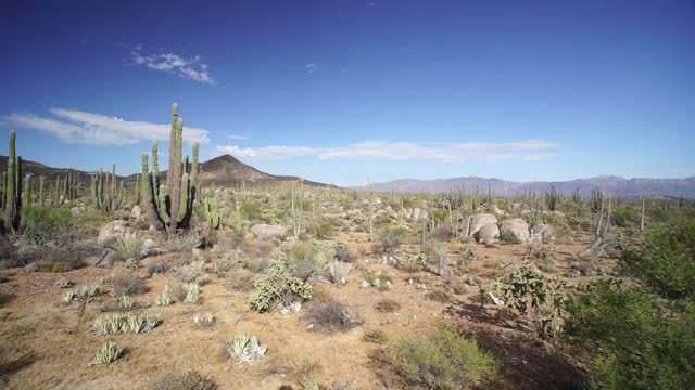baja desert mexico catavina desert - baja california peninsula stock videos & royalty-free footage