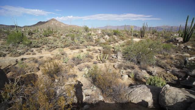 バハ砂漠メキシコカタヴィーナ砂漠 - とげのある点の映像素材/bロール
