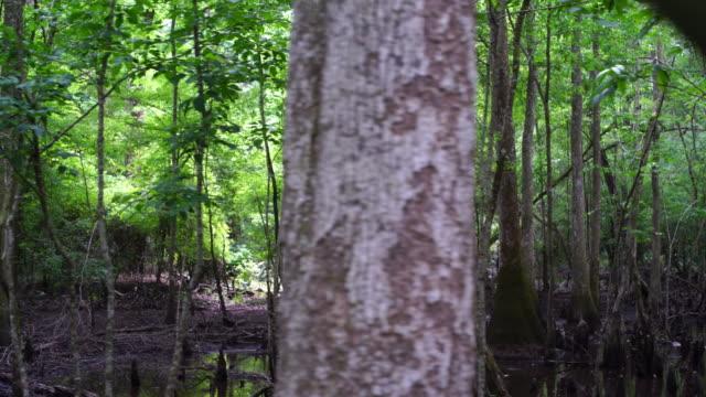 落羽松のサイプレススワンプます。パノラマに広がるのは、湿地、サウスカロライナ州、アメリカ南部 - 湿地点の映像素材/bロール