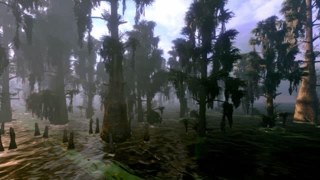 bald cypress tree swamp - swamp stock videos & royalty-free footage