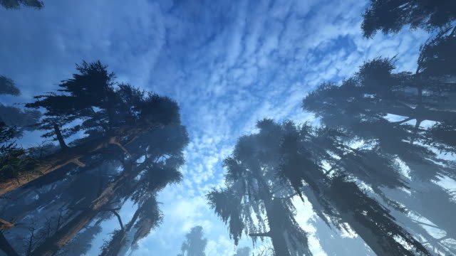 bald cypress tree swamp - southwest florida stock videos & royalty-free footage