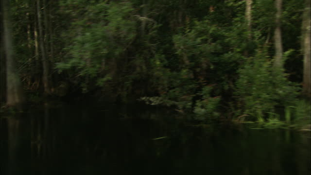bald cypress trees and lush vegetation grow in the still water of the okefenokee swamp. - okefenokee national wildlife refuge stock videos and b-roll footage