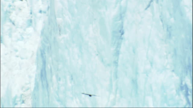 a bald eagle flies near the ice of the columbia glacier on prince william sound and the chugach mountains in alaska. available in hd. - prince william sound stock videos and b-roll footage