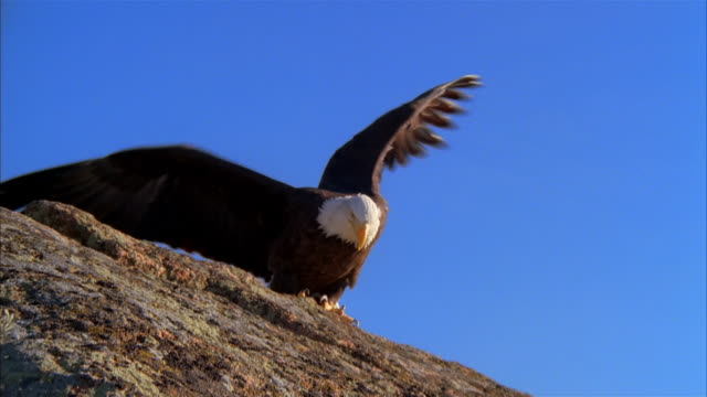MS, Bald Eagle landing on rock formation against clear sky, Boise, Idaho, USA