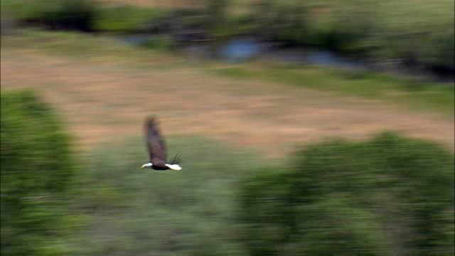 Cabeça de Águia Careca Vista aérea-Montana, Condado de Gallatin, Estados Unidos