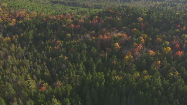vidéos et rushes de ws aerial pov bald mountain pond and fall forest with treetops / somerset county, maine, united states - cîme d'un arbre