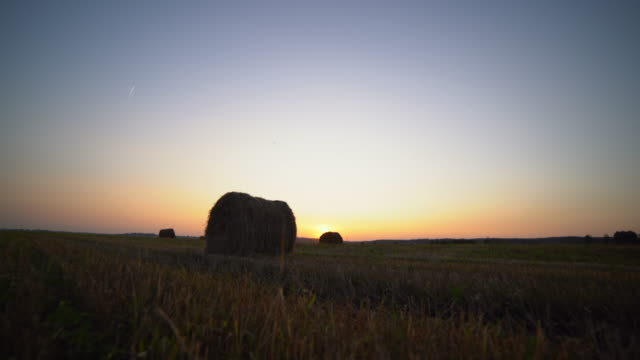 bale of hay in the field - fieno video stock e b–roll