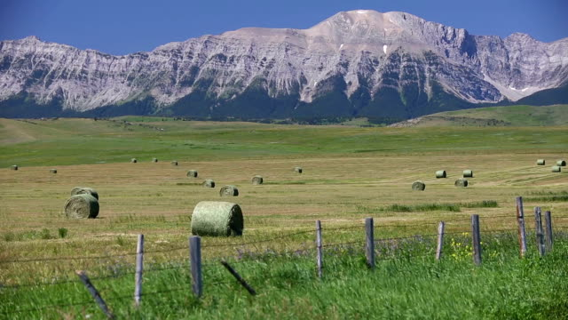bale rolled hay field alberta - traditionally canadian stock videos & royalty-free footage