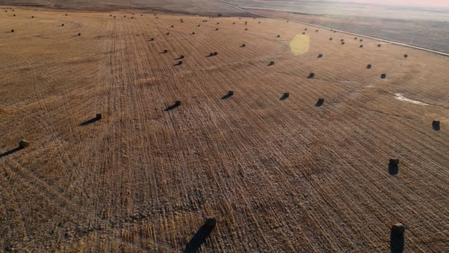 bales of hay in the harvested winter fields in kansas - hay texture stock videos & royalty-free footage