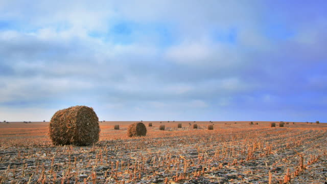 Bales of hay. Time lapse.
