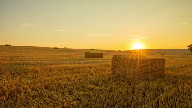 t/l 8k bales of wheat at sunrise - hay bail stock videos & royalty-free footage