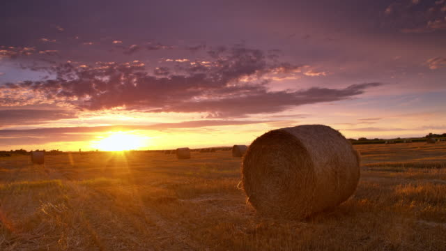 DS Bales of wheat at sunset