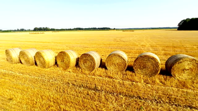 aerial bales of wheat laying on a field - hay field stock videos & royalty-free footage
