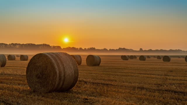 t/l bales on the field at sunrise - bale stock videos & royalty-free footage