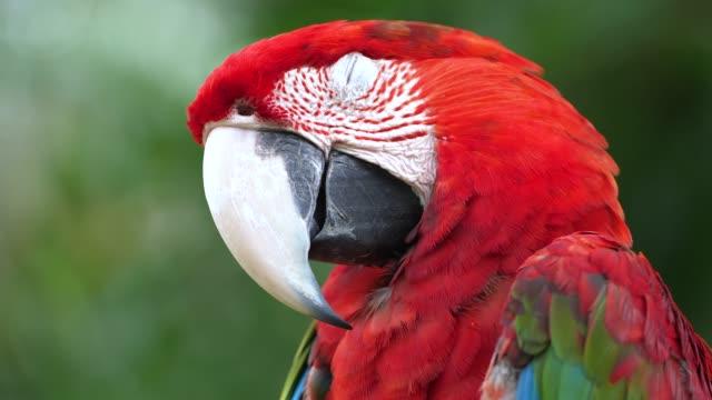vídeos y material grabado en eventos de stock de parque del pájaro de bali - pico boca de animal