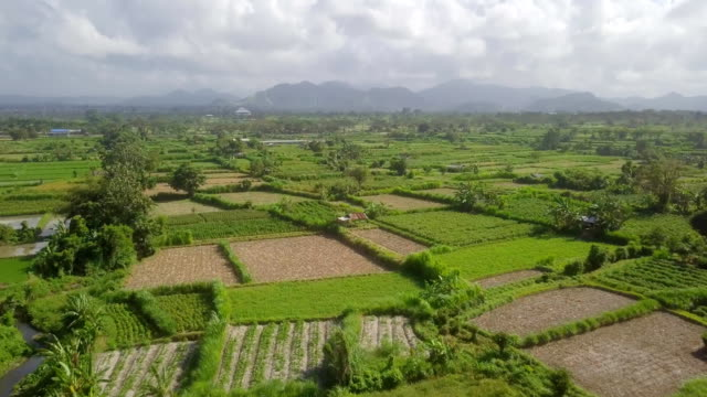bali rice field east coast - balinese culture stock videos & royalty-free footage