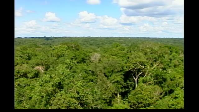 vidéos et rushes de united nations climate change conference rainforests deforestation factories in india emitting smoke - répandre