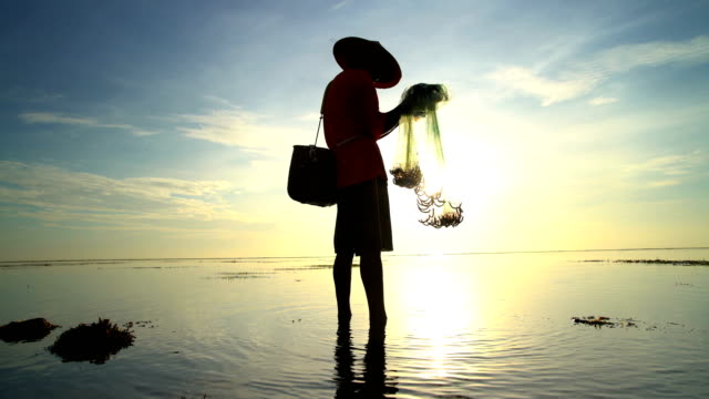 balinese man casting fishing net on indonesian coastline - balinese culture stock videos & royalty-free footage