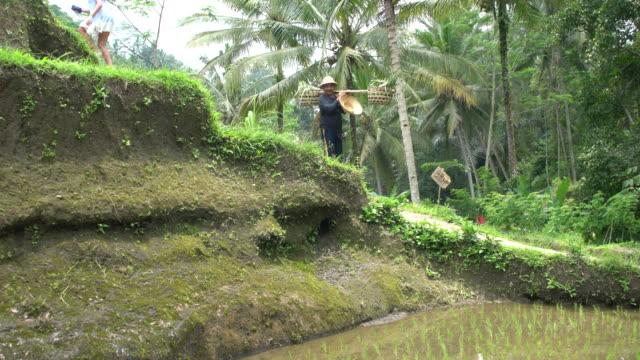 vídeos y material grabado en eventos de stock de balinese man wearing traditional cloths at the rice paddles at tegallalang, rice field terrace of bali, indonesia - cultura indonesia