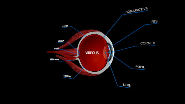 eye ball anatomy detail - anatomy stock videos & royalty-free footage