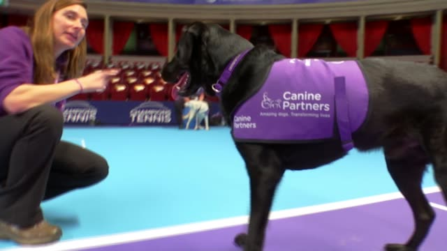 Ball Dogs to take part in ATP Champions Tour final UK London Royal Albert Hall various shots of ball dogs collecting balls during tennis matches Tim...