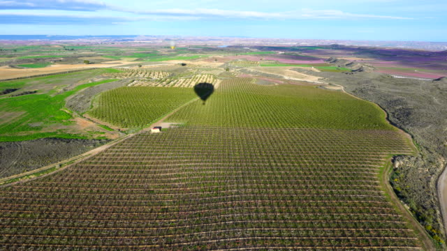 balloon ride, aerial view of melocotoneros en flor, aitona, lleida, catalonia, spain, europe - fruit tree stock videos & royalty-free footage