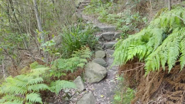 balls head track steps up - national park stock videos & royalty-free footage