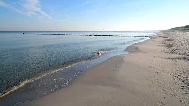 baltic sea beach, prerow, fischland-darß-zingst, baltic sea, mecklenburg-vorpommern, germany - sandig stock-videos und b-roll-filmmaterial