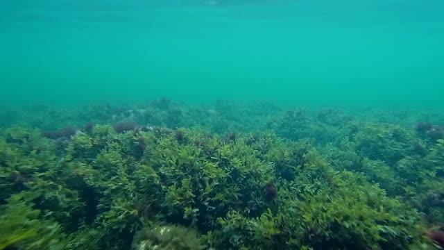 vídeos de stock e filmes b-roll de baltic sea underwater - sargaço