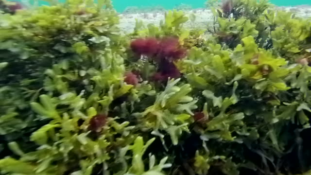 baltic sea underwater - sea grass plant video stock e b–roll