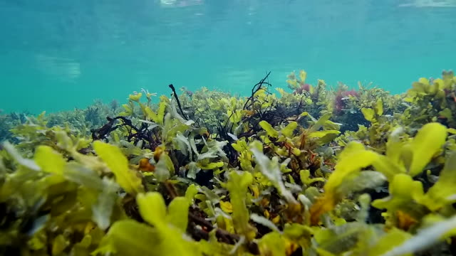 baltic sea underwater - seaweed stock videos & royalty-free footage