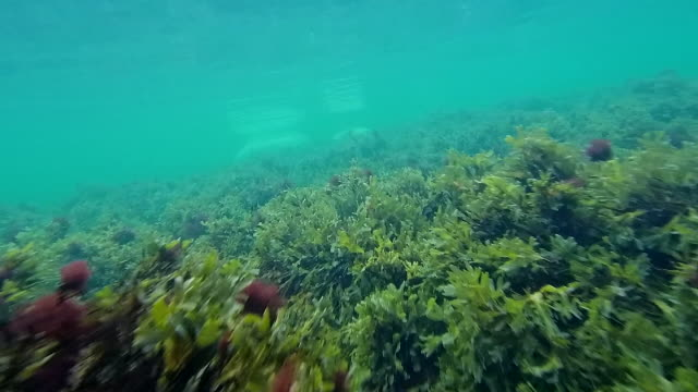 baltic sea underwater - sea grass plant stock videos & royalty-free footage