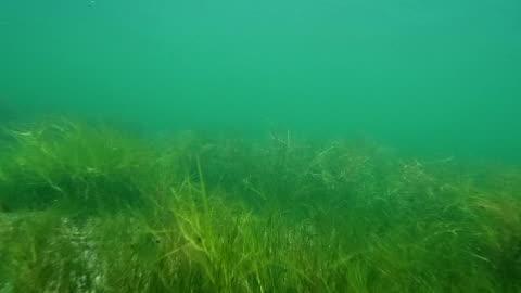 stockvideo's en b-roll-footage met onderwater van de oostzee - sea grass plant