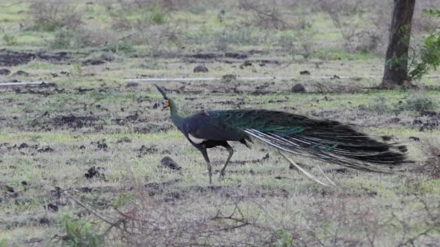 baluran national park. - java stock videos & royalty-free footage