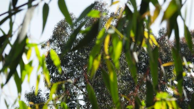 vídeos de stock, filmes e b-roll de fundo de bambu - folha de bambu