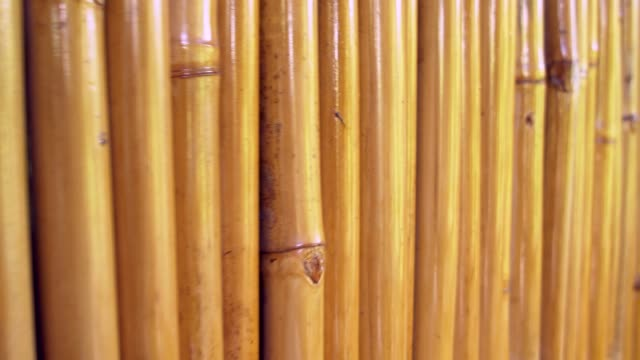 bamboo fence background texture - bamboo plant stock videos & royalty-free footage